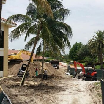 Ibis Phase II Construction Foxtail And Coconut Palm Installation#2